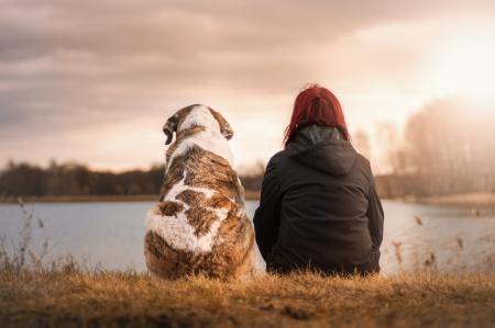 Livförsäkring för hund
